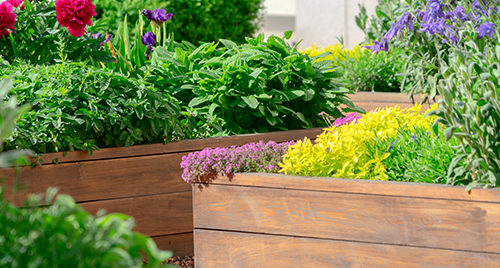 Raised beds in an urban garden growing plants herbs spices and vegetables.