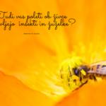 Poletni boj proti insektom in žuželkam